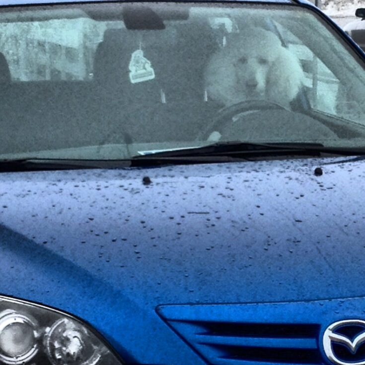 Stumbled across a doggy driver.